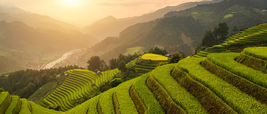 terraced field  pwsimg